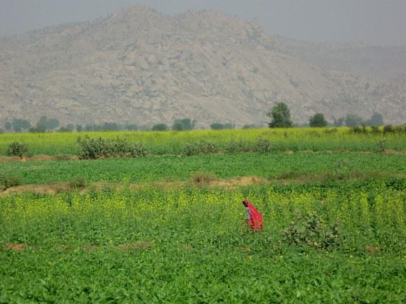 राजस्थान: कृषि एवं सम्बद्ध क्षेत्र